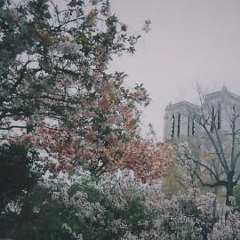 Lace & Lilacs
